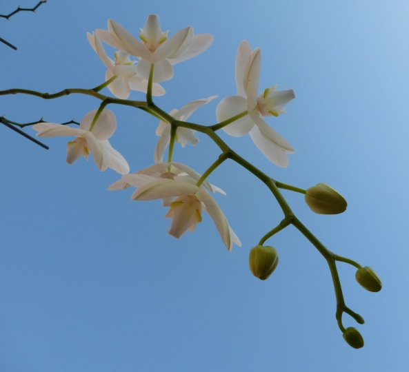 November 2012-A beautiful crisp, clear day upon which I decided to lie on the ground and take upward photos of my orchid!
