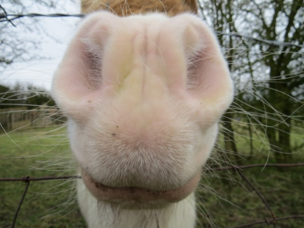 Sherlock had heard from Henry the horse about that photographer woman who came and took extremely close up photos of varying parts of animals' anatomy. Today it was his turn he supposed!