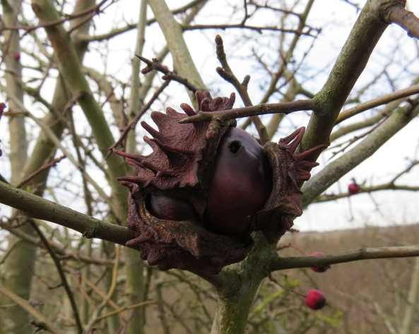 """Well,"" snorted Calendula Conker rattily, ""I can't believe I've got stuck in this tree with half my clothes ripped off and a weevil hole in my bum!"""