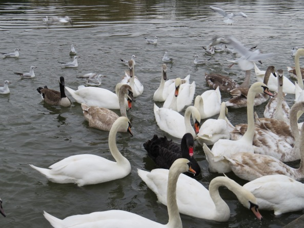 Thank goodness for common sense amongst the River Birds of Marlow!