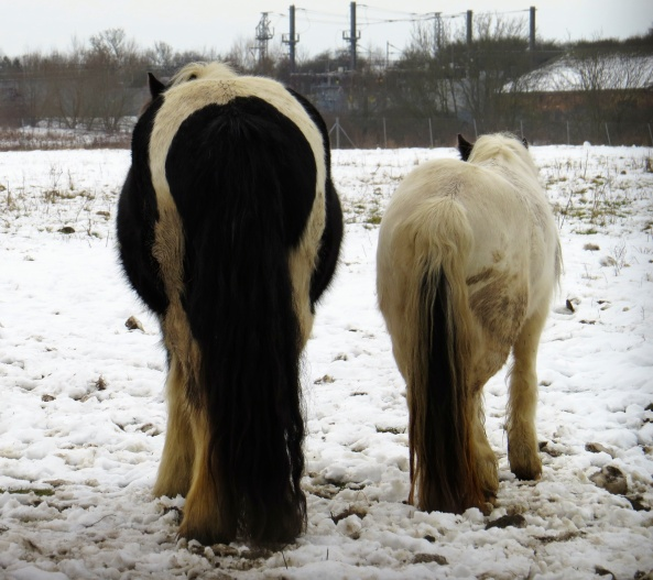 """I shall be glad when this snow has gone and look white once again!"" sighed Perry. ""Shhh! she's back again...look the other way and look casual!"" neighed Pint-size!"