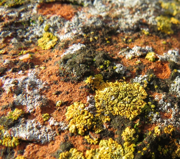 I love the colour of the lichen against the brick work.