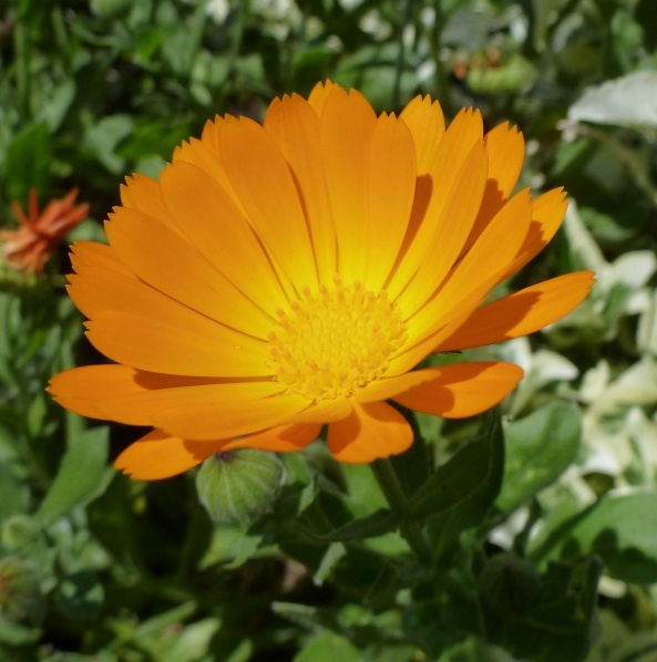 May 2012-Beautiful flower that I chose as my blog picture