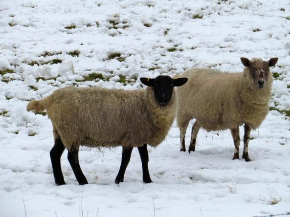 """Ewe talking to me? Ewe talking to me? Nah, she's not in. Bye then...bye!"""