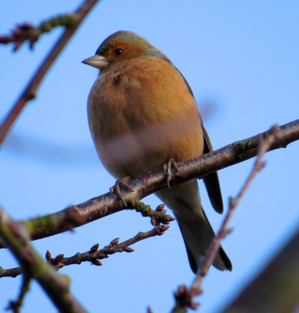 """Why is she calling me Chertsey...what a ridiculous name!"" snapped Dave Chaffinch!"