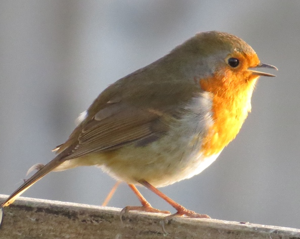 """Thank goodness that we Robins aren't competitive. They are a silly bunch of tits!"" said Rita before flying off!"