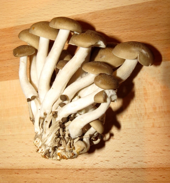 """""""Who has wrenched us with unfortunate hand?"""" exclaimed the exotic mushrooms...""""Whither are we off to?"""""""