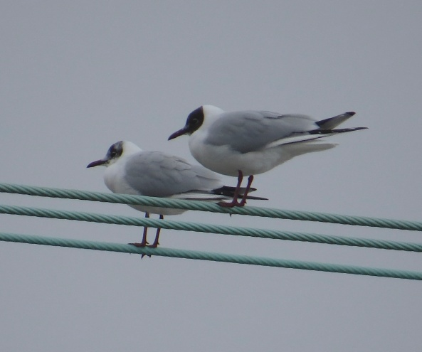 """Cor my feet are cold!"" said Gabriel Gull to Gail Gull, who sadly just continued to look disinterested in anything he had to say!"