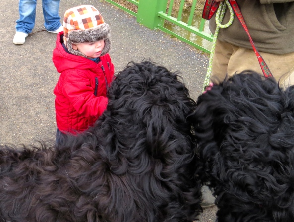 Imagine coming face to face with a dog as tall as you are!