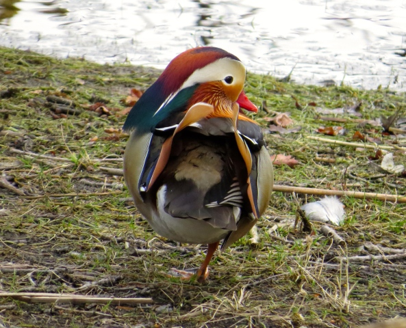 """""""How many legs does a mandarin have When he's standing alone by the water? Answer me now, what do you think Cos you don't know you really ought!"""" sang Miyagi in a willowy voice!"""