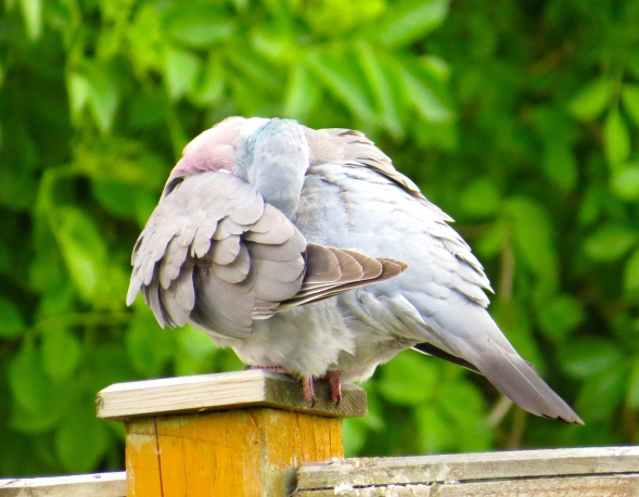 """Grey!"" sang Peony once more checking her wing pits!"