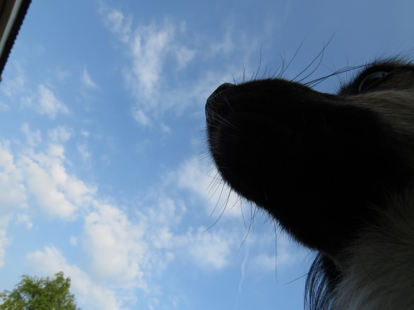 An 'under the chin' angle on my mother's dog is not something one sees every day!
