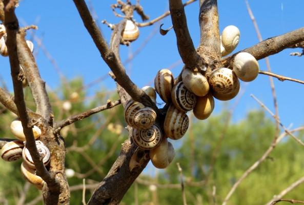 Hundreds of snails!