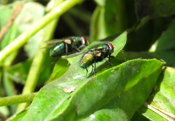 Freda and Frederick were no help to each other at all as they had no idea where those darned greenfly were!