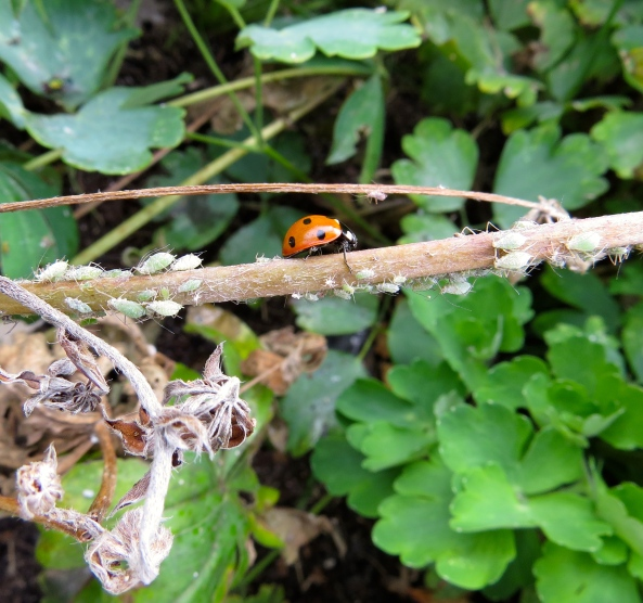 The aphids scattered! (Well you would wouldn't you?)