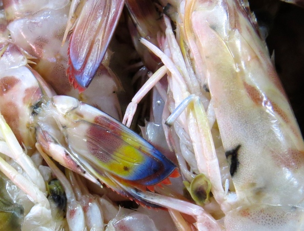 I thought I knew what colour these critters were….but red, yellow and blue were not amongst the colours I thought!
