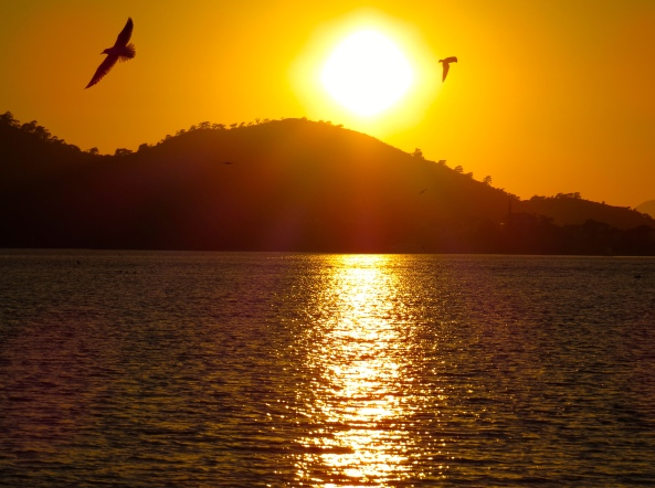 The Turkish seagulls found in Fethiye harbour were in the habit of posing for photographers in the eternal 'setting sun and flying bird' pretty picture way!
