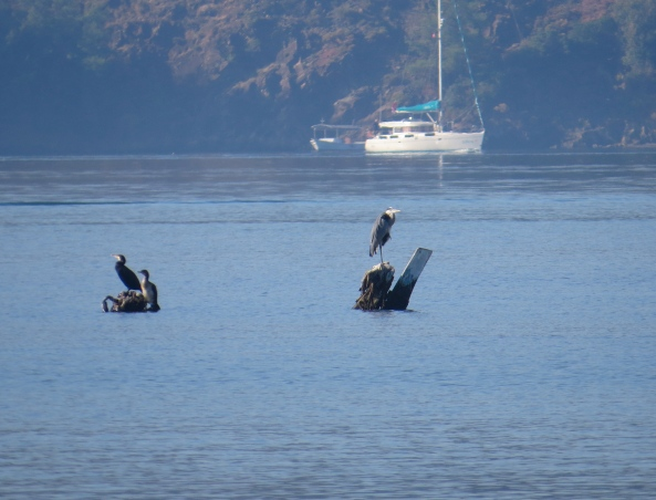 Harfül is still practising standing on one leg and the comrade cormorants are still disinterested!