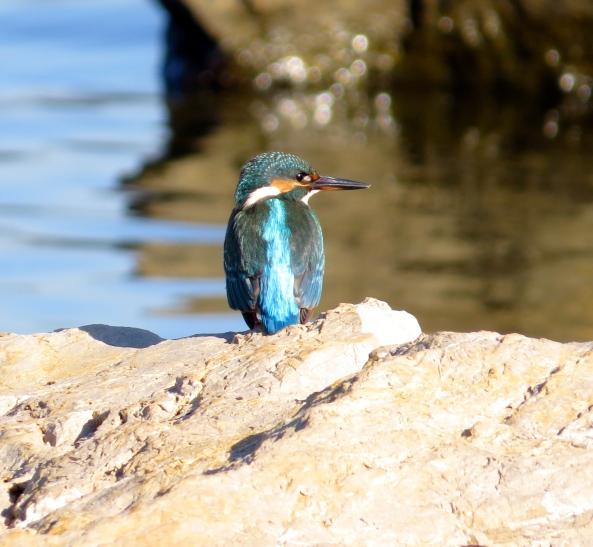 """""""Well,"""" said Kufu Kingfisher, """"I do rather like to put on a show for the tourists!"""""""