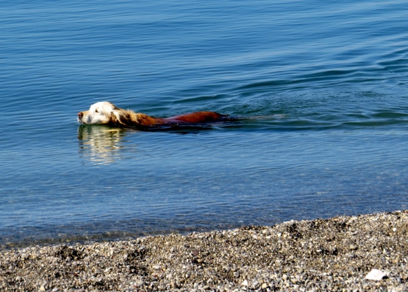 Whilst the dog owned by English people abroad found he was in the habit of taking a daily dip!