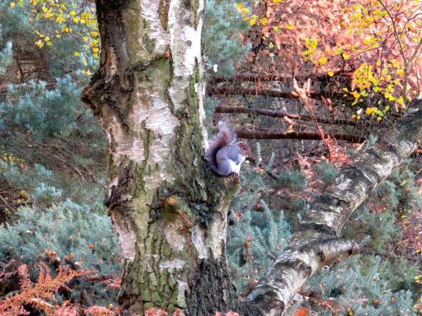 He sat in his tree in the cool Autumn air and watched to check no one violated Wordless Wednesday!
