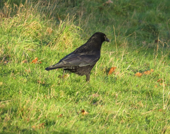 Crookshanks Crow couldn't believe his eyes! He certainly hadn't expected to see a worm that big!