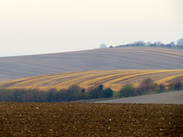 And the lilting, rolling hills of Bedfordshire lilted and rolled with the best of them…but naturally, in silence!
