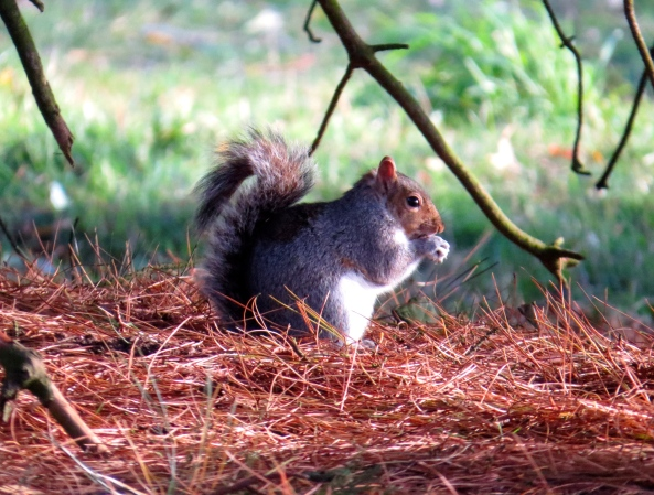 Whilst Saul Squirrel was saying his prayers…..