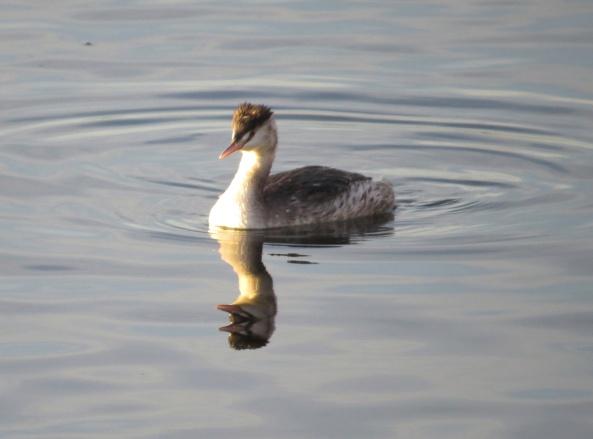 He produced one beak more!!