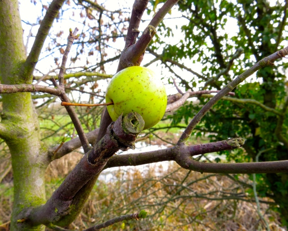 Andrew Apple wondered the same but realised he was far more comfortable balanced in the crook of the branches!