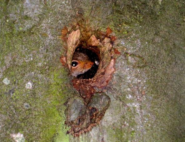 """""""When's tea mum?"""" squeaked Symphony Squirrel!"""