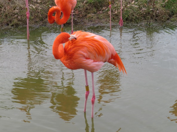 Florian Flamingo could not shake off the feeling that he was being watched…..