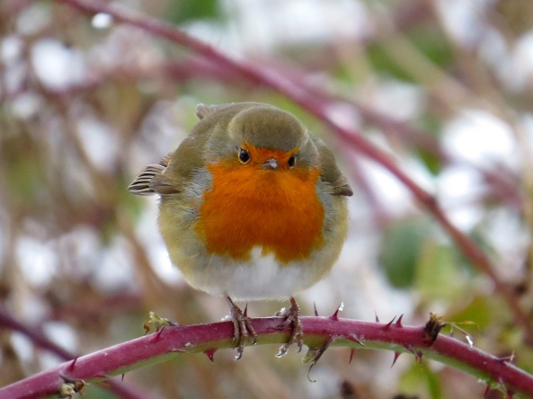 You've heard of a 'round robin'!