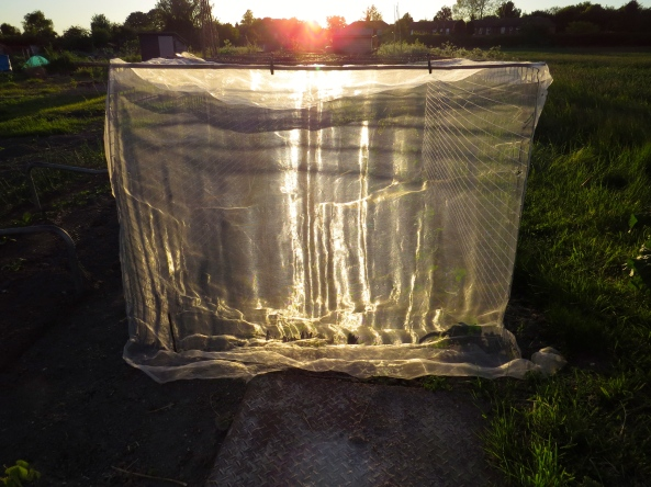 Some nylon netting at my allotment in the sunset!