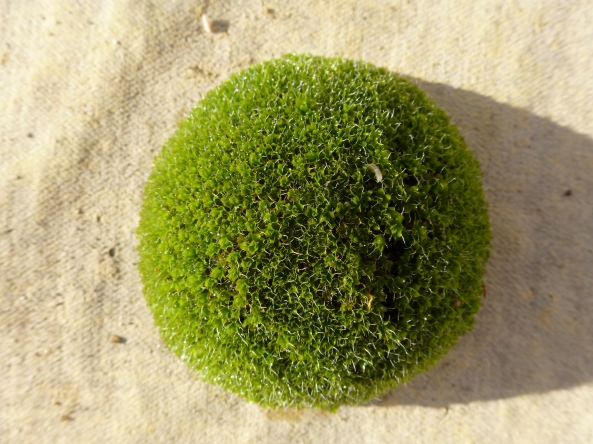Moss off my roof!
