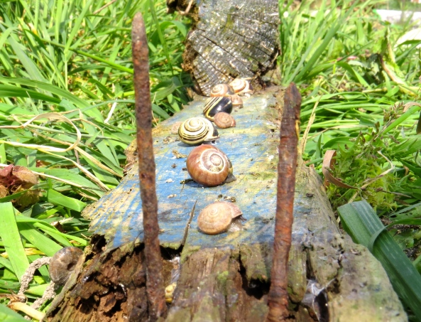 I certainly don't want snails for lunch so I'm hoping they'll take the hint and vacate!