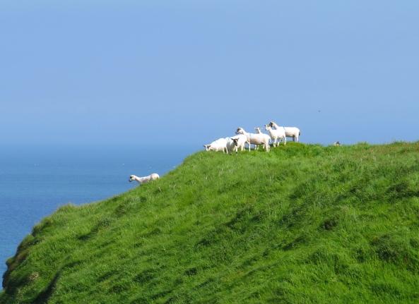 Sheep or lemmings?
