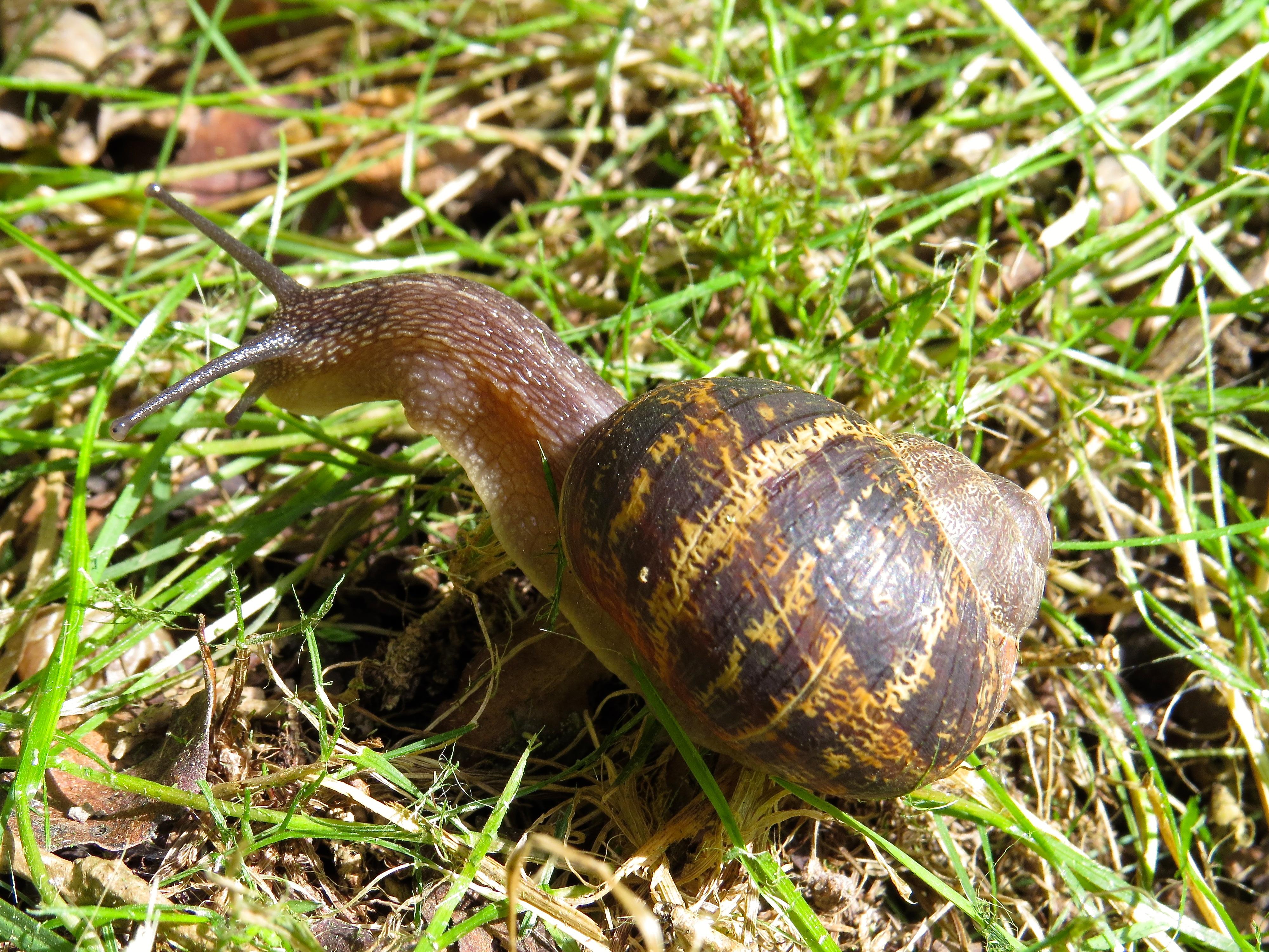 Snails | Dot knows! (elleturner4)