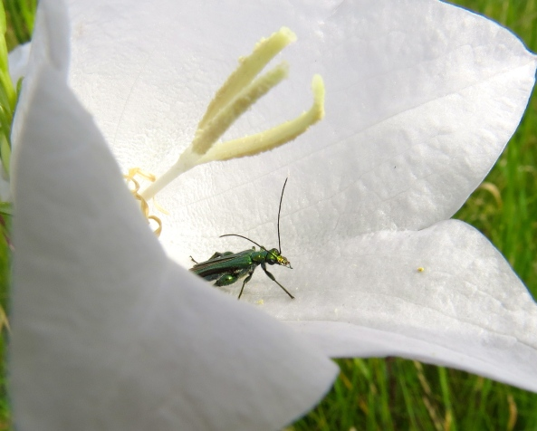 So did Mr. Green Bulgy Legged Beetle!