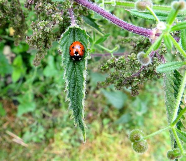 L Ladybird!