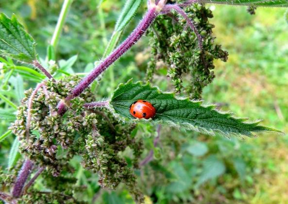 Lucinda Ladybird!