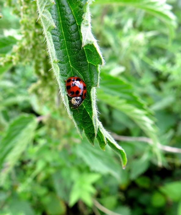 Leonard Ladybird!