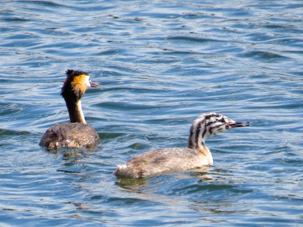 "Garamundi Grebe shouted ""Don't pull it Calendra….don't pull!"""