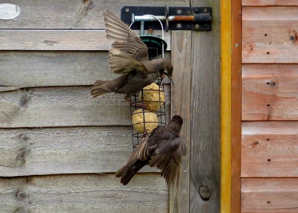 """""""I said Leave 'em alone…..they're mine all mine!"""" screeched Stacey Starling in a most unbecoming way!"""