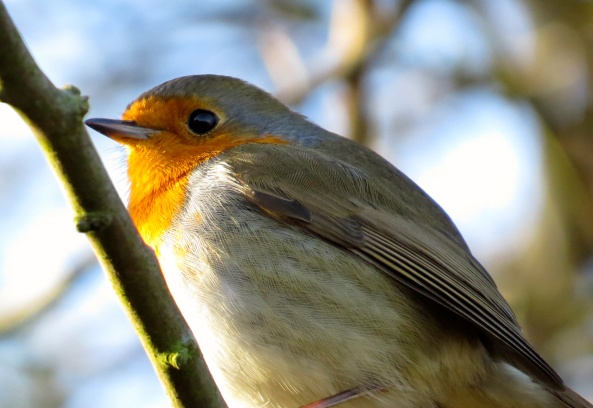 Robin bobbin….gorgeous and dreamy!