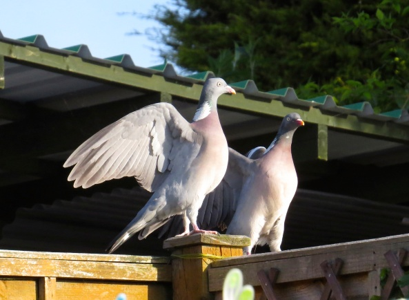 Good old plain wing flapping got their heart rates going and started their sessions…..