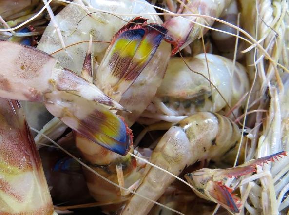 Bits o' prawn in a fish market!