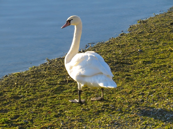 Sven Swan was a little bored and decided to begin to show off…..