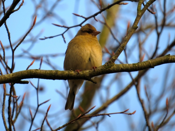 "Cheryl Chaffinch fluffed up her feathers against the wind and said, ""Oooh I remember when all the leaves were on the trees and I could hide from camera women like 'er down there!…….."""