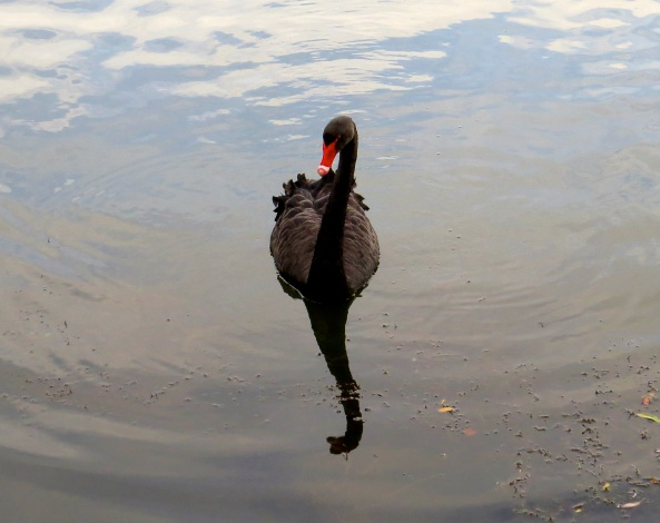 """She sometimes likes to pose like this And smiles at her reflection """"Oh look the Loch Ness monster"""" She says on closer inspection!"""